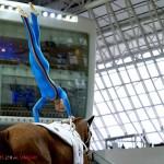 Chi Al Shaqab 2015 : compétition équestre